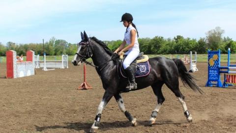 Лошадь на ипподроме серьезно повредила ногу саратовской школьнице