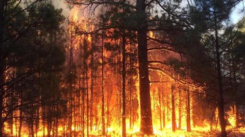 В Ровенском районе отдыхающие устроили пожар в лесу