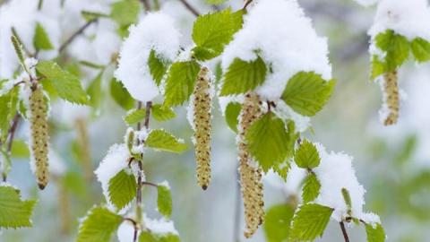На территории области ожидаются заморозки до -2 градусов