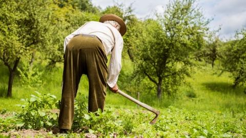 Удар мотыгой по печени оказался смертельным для пенсионера