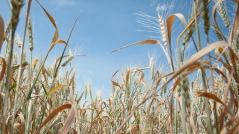 Этим летом засуха прогнозируется в 23 районах области
