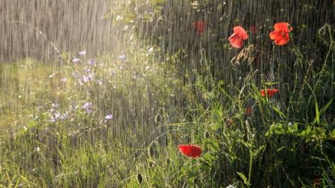 Синоптики обещают по области дожди и грозы