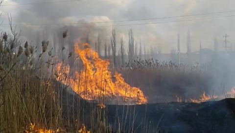 Детский лагерь в Энгельсском районе эвакуирован из-за возгорания камыша