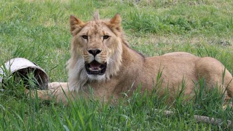 Пензенский зоопарк приглашает посетить островок дикой природы всей семьей