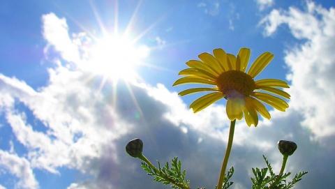 Сегодня в Саратове температура воздуха 22 градуса