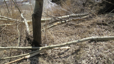 В 2019 году саратовцам разрешат собирать сухие ветки