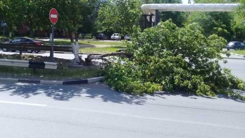 На проезжую часть улицы Тархова упало дерево