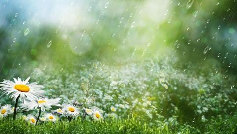 Синоптики обещают небольшой дождь с грозой