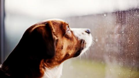 Синоптики обещают саратовцам дожди и шквалистый ветер