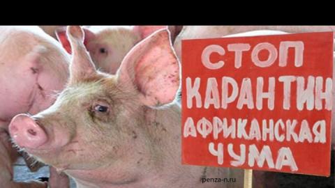 Случаи АЧС выявлены в Ртищевском районе