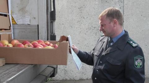 В Саратовскую область не пустили тонну свежих яблок