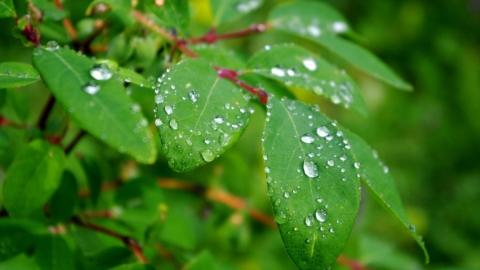 Сегодня по области возможны дожди и грозы