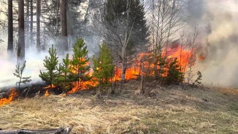 В Саратовской области произошел лесной пожар