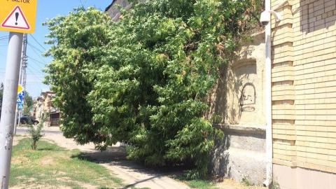 Рухнувшее дерево на Первомайской опилили