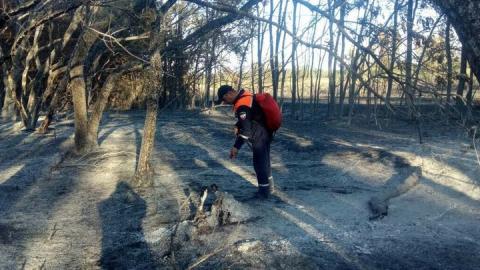 В Лысогорском районе пожарные локализуют лесной пожар