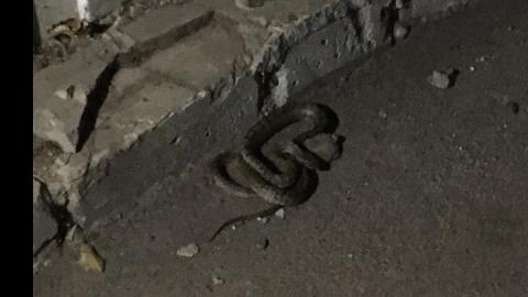 "Очевидец: ""В Саратове проснулись змеи"""