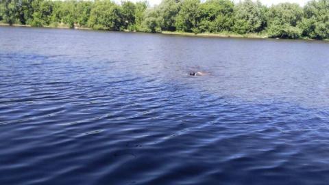 Водолазы вытащили из водоема тело очередного утонувшего