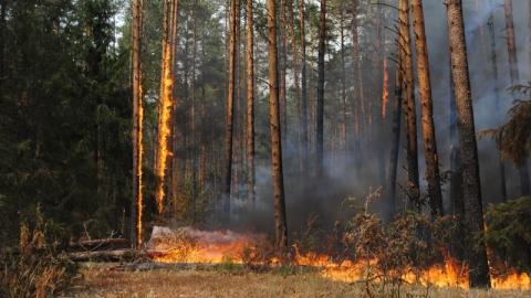 """У детского лагеря """"Сосенки"""" произошел лесной пожар"""