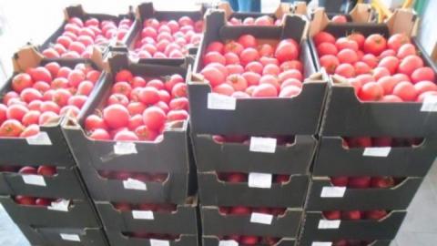 В Саратов не пустили казахстанские томаты сомнительного качества