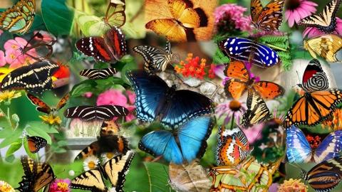 Для жителей города в центре Саратова создан тропический рай