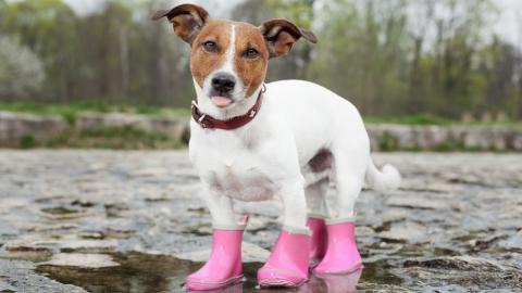 Синоптики предупреждают саратовцев о дожде и граде