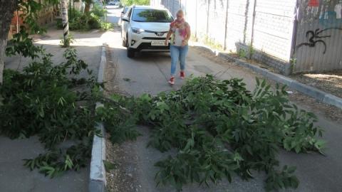 Варварскую опиловку молодых деревьев в Саратове объяснили «распоряжением губернатора»