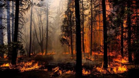 В Саратовской области горят леса на землях Минобороны и под Марксом