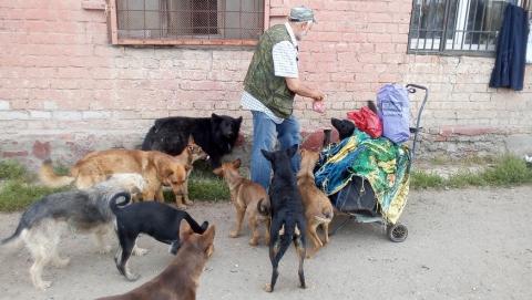 По улицам Саратова бегает больше 2300 бездомных собак