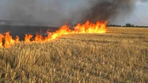 В Саратовской области сгорело поле пшеницы