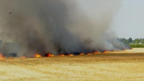 В выходные в области горели  поля с озимыми и рожью