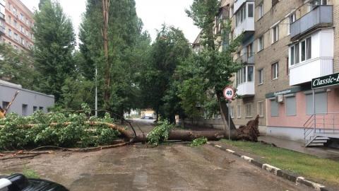 В Саратове во время дождя упавшим деревом травмирована женщина