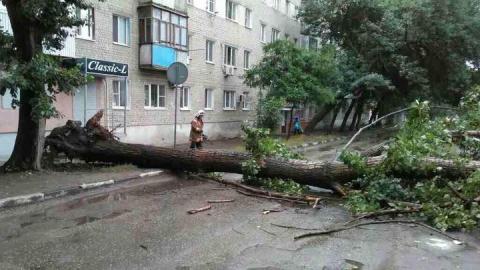 Спасатели убрали рухнувшее на Большой Садовой дерево