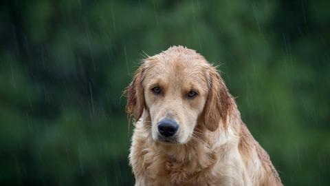 Саратовцев ждут жаркие и дождливые выходные