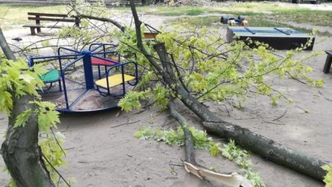 Упавшей веткой дерева травмирован ребенок на детской площадке