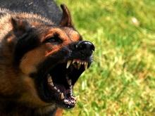 Бродячая собака укусила ребенка в лицо