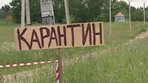 В Ртищевском запрещен отлов диких животных для вывоза в зоопарки