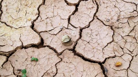 Ущерб от засухи в Саратовской области оценивается в 200 миллионов рублей