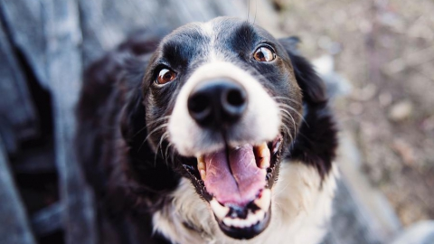 Ершовца оштрафуют за напавшую на подростка непривитую собаку