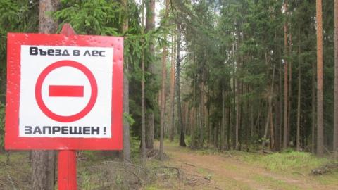 В области вновь введен запрет на посещение лесов