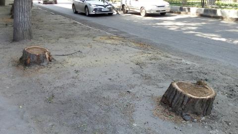 Ночью на улице Астраханской были уничтожены деревья