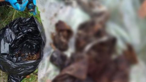 В колодце под Саратовом нашли мумию
