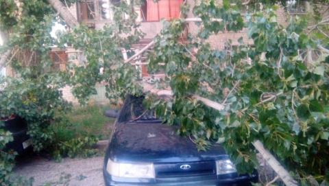 """На Большой Садовой старое дерево рухнуло на """"десятку"""" и """"Киа"""""""