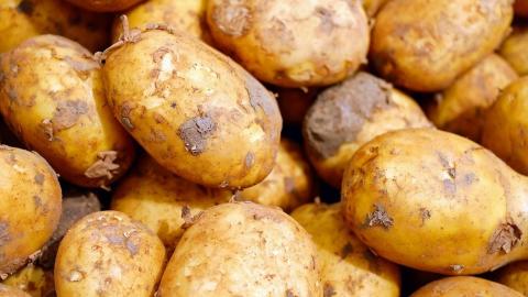 В Саратовской области собрали 73 тысячи тонн картошки