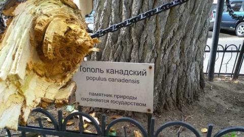 В Саратове рухнул памятник природы