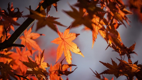 В пресс-центре «МК» в Саратове» подведут итоги лета и расскажут прогноз ЧС на осень