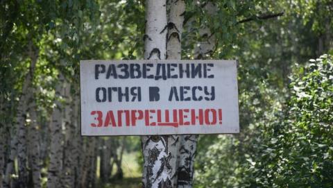 Число лесных пожаров выросло почти в три раза в Саратовской области