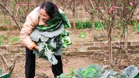 Около трёх тысяч работников сельского хозяйства региона трудятся нелегально