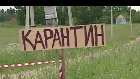 Деревня Осиновка закрыта на карантин по бешенству