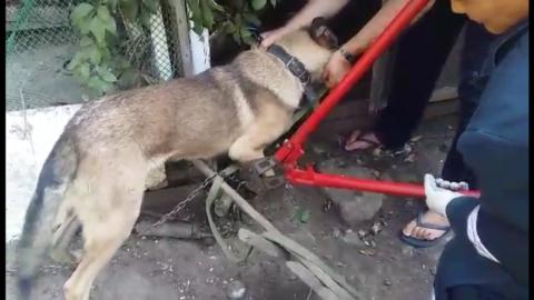 Саратовские спасатели помогли застрявшей в карабине собаке