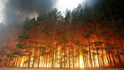 Ночью в Балашовском районе горел 300-летний сосновый лес